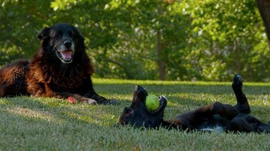 Documental del mes: Los Reyes, una mirada canina